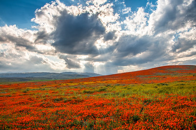 Poppy Reserve Spring Symphony #5 Antelope Valley Poppy Reserve Spring Storm God Rays Wild Flowers Super Bloom Fine Art Landscape Nature Photography!    California Wildflowers Superbloom!  Elliot McGucken Fine Art Landscape Nature Photography & Luxury Wall Art