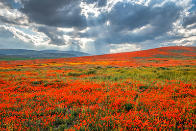 Poppy Reserve Spring Symphony #2 Antelope Valley Poppy Reserve Spring Storm God Rays Wild Flowers Super Bloom Fine Art Landscape Nature Photography!    California Wildflowers Superbloom!  Elliot McGucken Fine Art Landscape Nature Photography & Luxury Wall Art