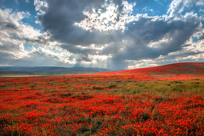 Poppy Reserve Spring Symphony #10 Antelope Valley Poppy Reserve Spring Storm God Rays Wild Flowers Super Bloom Fine Art Landscape Nature Photography!    California Wildflowers Superbloom!  Elliot McGucken Fine Art Landscape Nature Photography & Luxury Wall Art