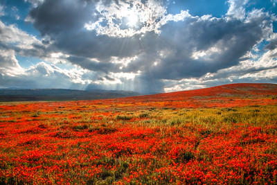 Poppy Reserve Spring Symphony #4 Antelope Valley Poppy Reserve Spring Storm God Rays Wild Flowers Super Bloom Fine Art Landscape Nature Photography!    California Wildflowers Superbloom!  Elliot McGucken Fine Art Landscape Nature Photography & Luxury Wall Art