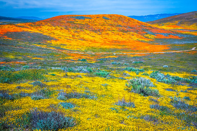 Spring Symphony Antelope Valley Magnum Opus #9: Antelope Valley Poppy Reserve Wildflowers Superbloom Fine Art Landscape Nature Photography: California Fine Art Landscape Nature Photography