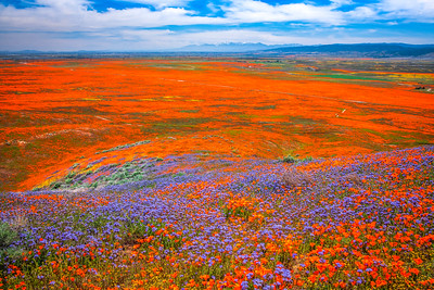 Spring Symphony Antelope Valley Magnum Opus #14: Antelope Valley Poppy Reserve Wildflowers Superbloom Fine Art Landscape Nature Photography: California Fine Art Landscape Nature Photography