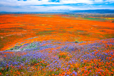 Spring Symphony Antelope Valley Magnum Opus #5: Antelope Valley Poppy Reserve Wildflowers Superbloom Fine Art Landscape Nature Photography: California Fine Art Landscape Nature Photography