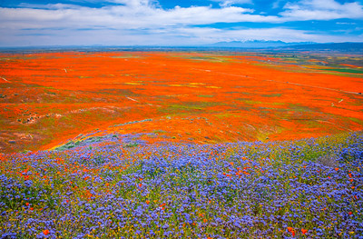 Spring Symphony Antelope Valley Magnum Opus #6: Antelope Valley Poppy Reserve Wildflowers Superbloom Fine Art Landscape Nature Photography: California Fine Art Landscape Nature Photography