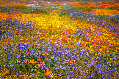Spring Symphony Antelope Valley Magnum Opus #11: Antelope Valley Poppy Reserve Wildflowers Superbloom Fine Art Landscape Nature Photography: California Fine Art Landscape Nature Photography