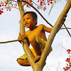 Golden Light Monkey Boy<br /> Gillies Island, Indonesia