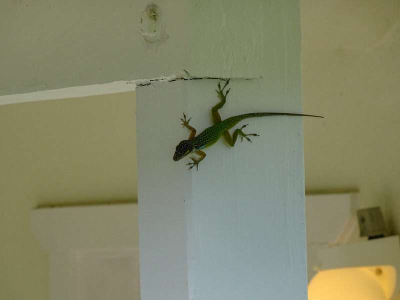 a gecko on someone porch