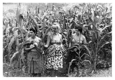 Las chicas del maíz...