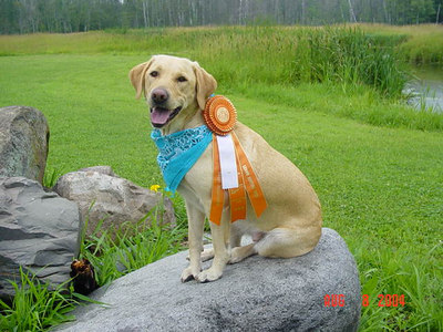 2004 Senior Hunter Title
