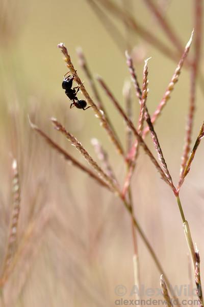 Seed Harvesters