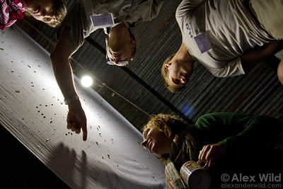 Myrmecologists at Ant Course 2012 collect alate males and queens at a mercury vapor lamp.  Kibale forest, Uganda