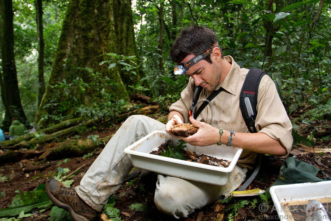 Brad Wright (Towson University) collects ants from rotting wood at Ant Course 2012 in Uganda.