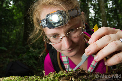 Andrea Walker (University of Illinois) collecting specimens at Ant Course 2012 in Uganda.