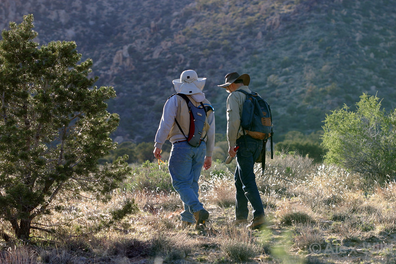 Brian O'Meara and Phil Ward  search for ants in the Mojave desert (2004).