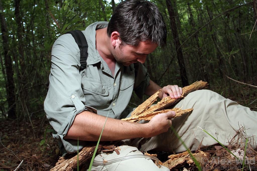 Benoit Guenard dissembles a rotting log to look for ants, North Carolina.