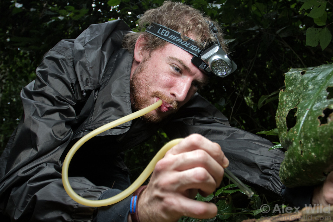 Antoine Felden uses an aspirator to collect ants from a rotting log at Ant Course 2012 in Uganda.