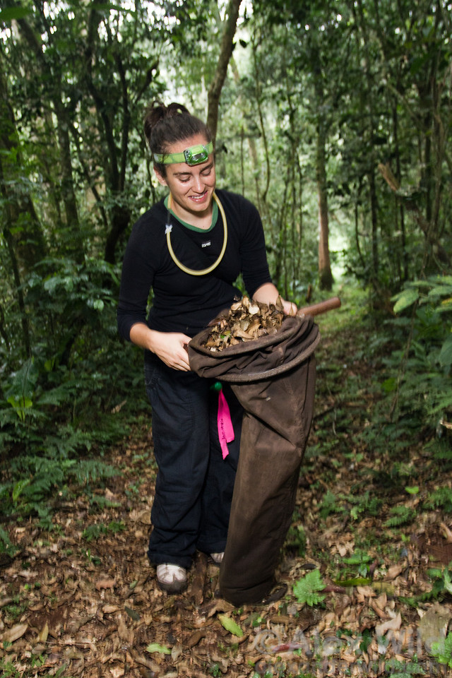 Claire Morandin (University of Helsinki), sifting leaf litter at Ant Course 2012 in Uganda.