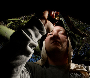 Scott Powell peers into the nest entrance of Cephalotes rohweri turtle ants.