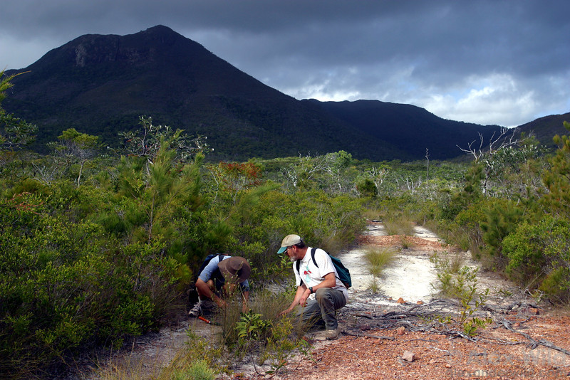 Phil Ward and Gary Alpert collect ants in the Cape York Peninsula of northern Australia.