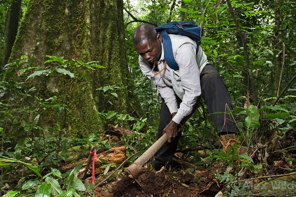 Kolo Yéo (Université d'Abobo Adjamé, Côte d'Ivoire), digs a trench to collect soil-dwelling ants at Ant Course 2012 in Uganda.