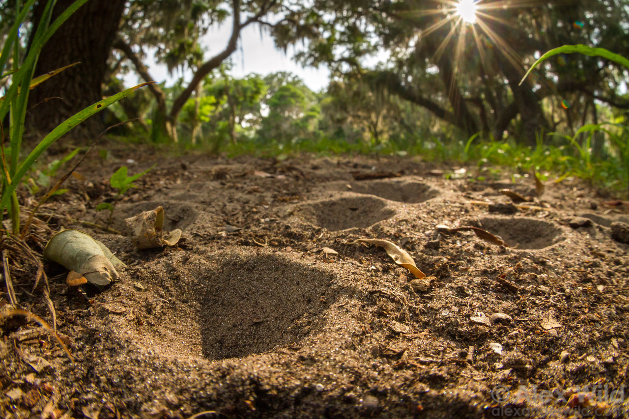 Ant Lion pits