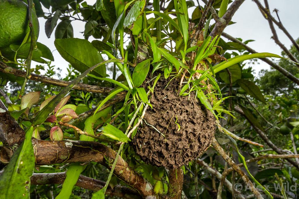 Ant Garden