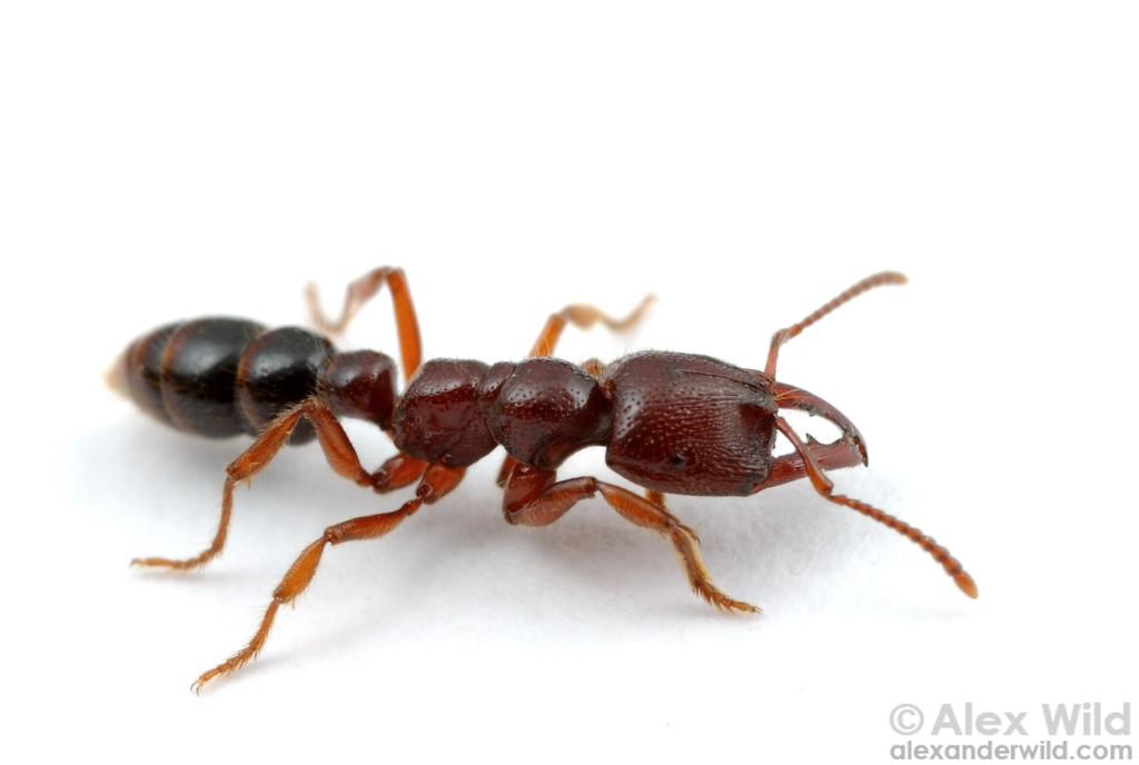 Ant - Actionappraisal.Us Best Wallpaper 2018