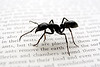 Directory of Ant Genera by Subfamily : Directory of Ant Genera, listed by subfamily