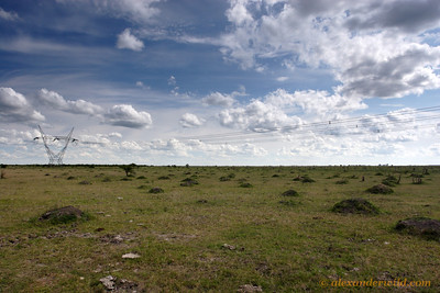 Overdispersed nest mounds of Camponotus termitarius, an emerging pest of pastures and old agricultural fields in northern Argentina.  Perdices, Entre Rios, Argentina