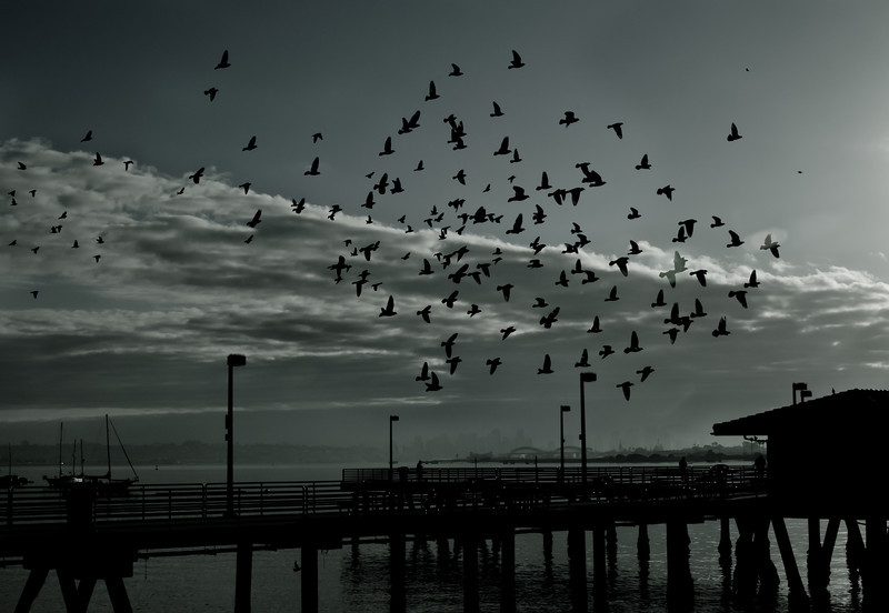 4March11 - Flock of silhouettes.<br /> SMCP-F 28mm f/2.8
