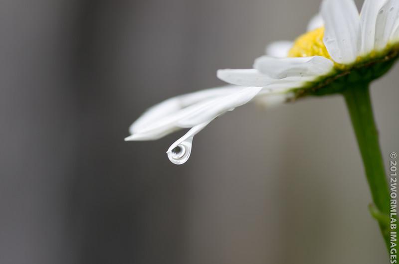 15Feb12 - Rain Drop falling from the sky. Happy Birthday Mom, say hi to G.
