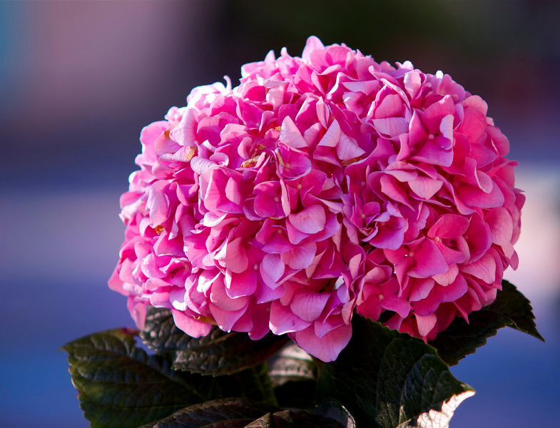 2Nov10-Pink solidarity.<br /> Sigma 50-150mm f/2.8