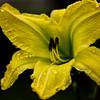 28July11 - Open in yellow.