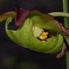 26Apr11 - Umbrella flower.<br /> SMCP-DFA 100mm WR f/2.8