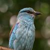 4May11 - Bluebird.