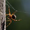 12Nov11. Glow spider.