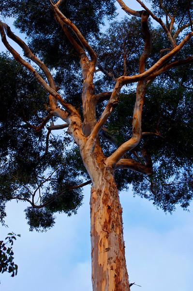 22Oct10-Tree and Sky.<br /> Sigma 50-150mm f/2.8