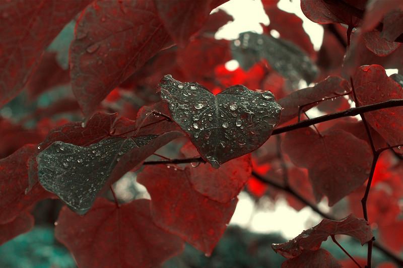 6Oct10-Feeling Fall.<br /> SMCP-FA 50mm f/2.8
