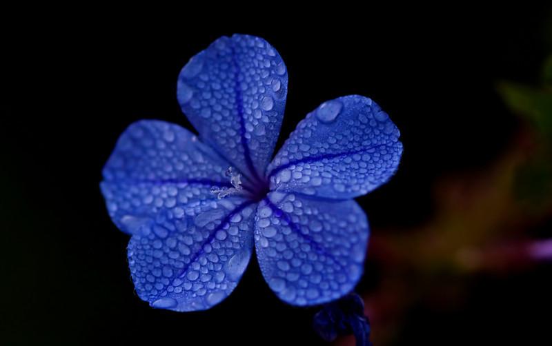 11Dec10- Baby blue.<br /> SMCP-DFA 100mm WR f/2.8