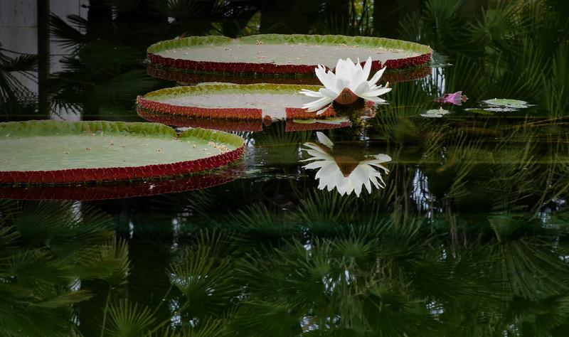 30Aug11 - White flower #2.