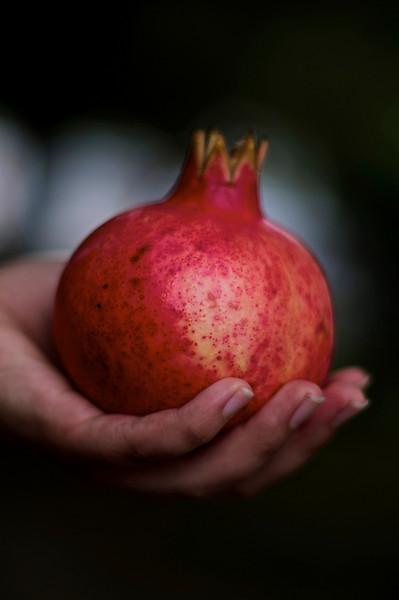 28Sept10-Eliza's pomegranate.<br /> SMCP-FA 50mm f/1.4