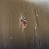 6August11 - Side spider.