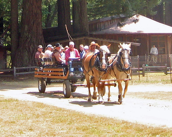 REDWOOD RENDEZVOUS