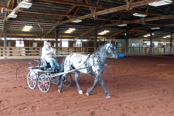 ANYWHERE WILD! COLE CREEK EQUESTRIAN CENTER, KELSEYVILLE
