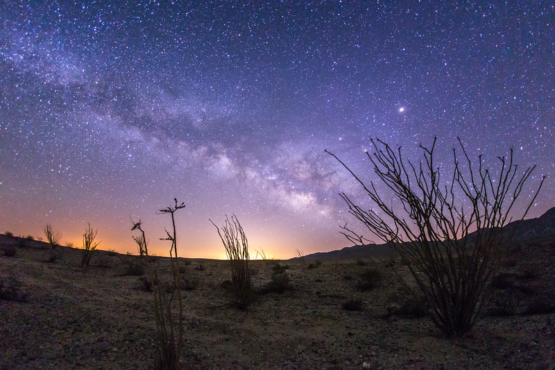 The Milky Way and ocotillo