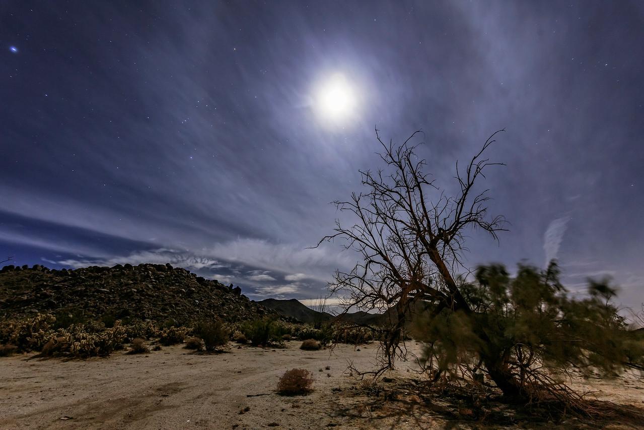 Moon Halo, Mountains, and Smoketree in the Anza-Borrego Desert