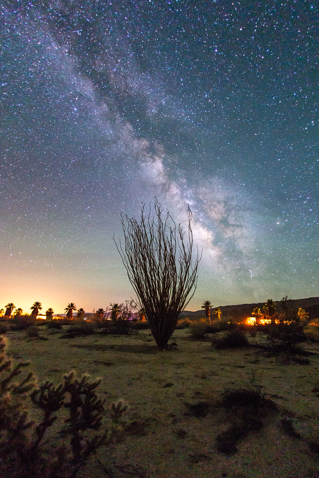 The Milky Way and an Ocotillo
