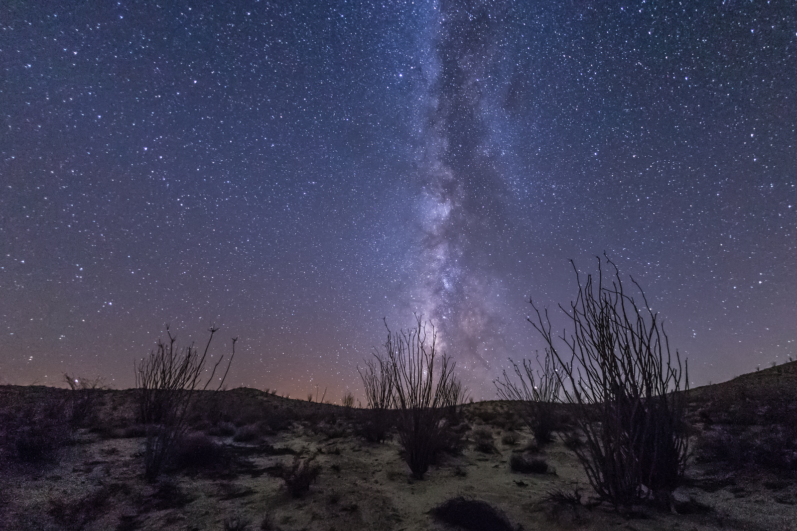 Ocotillo and the Milky Way in Anza-Borrego Desert