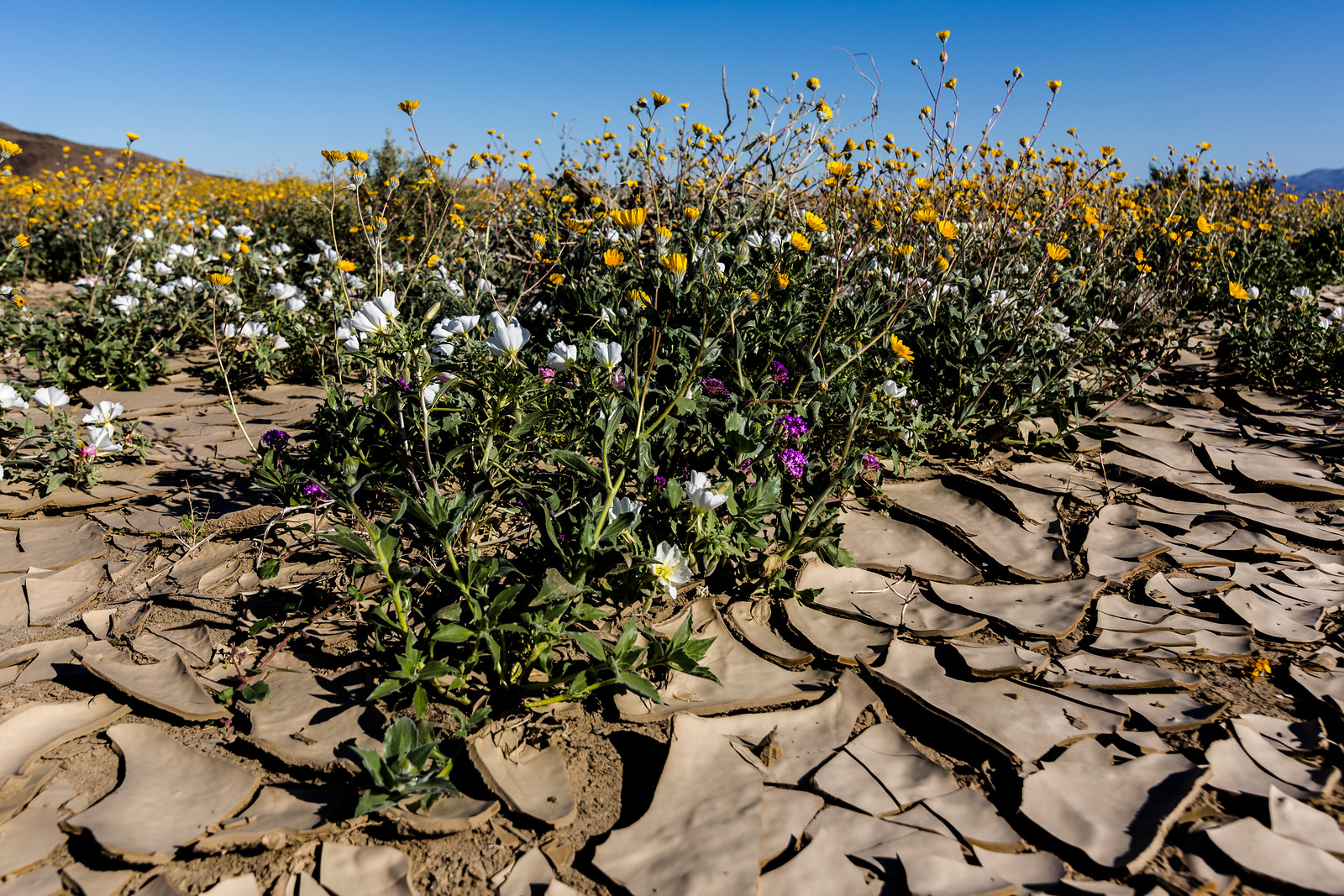 Cracked earth and wildflowers.