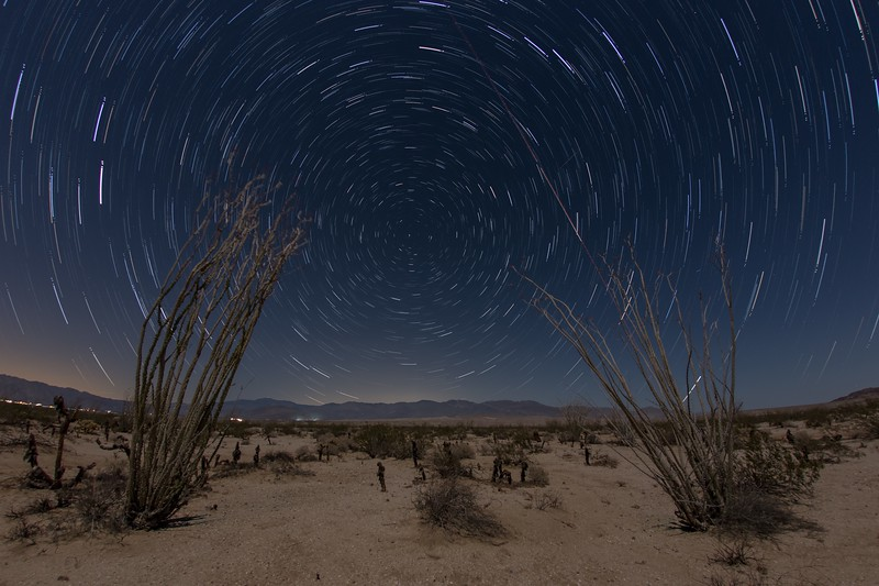 Star trails behind a pair of ocotillo